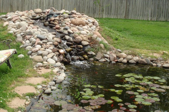 My backyard goldfish pond