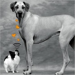 Little black and white dog with big dog