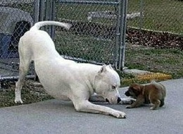 Big white dog with little brown dog