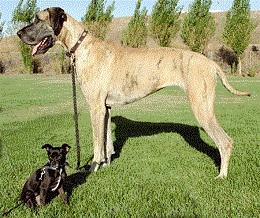 Little black dog with big black and brown dog